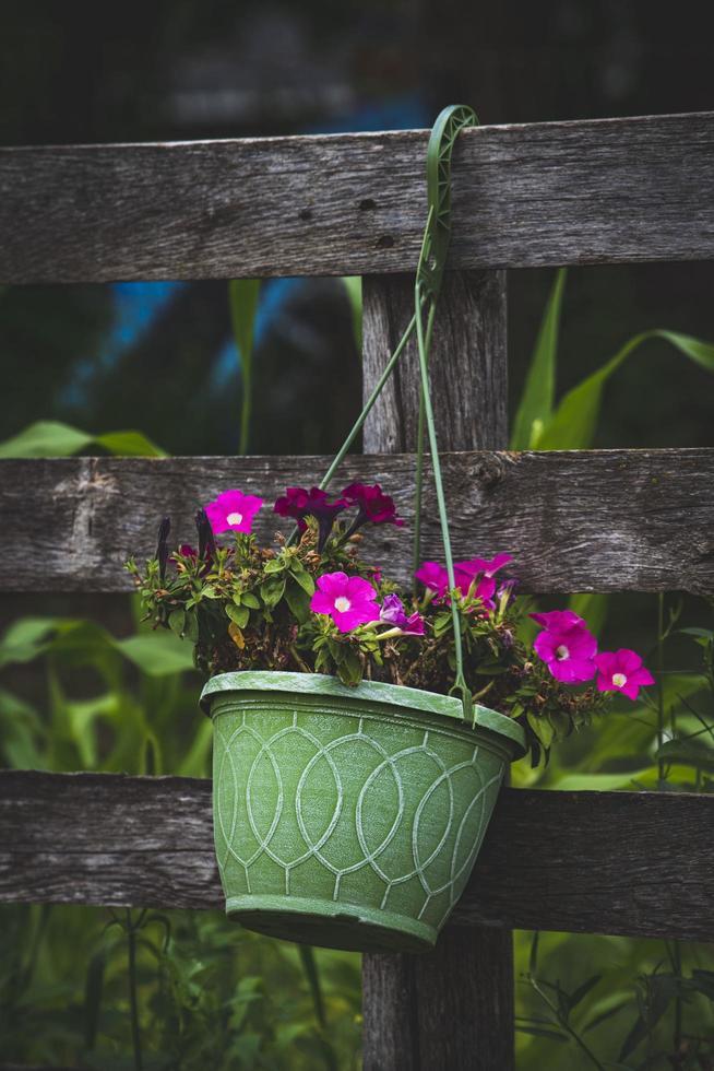 Pink flowers in hanging basket photo