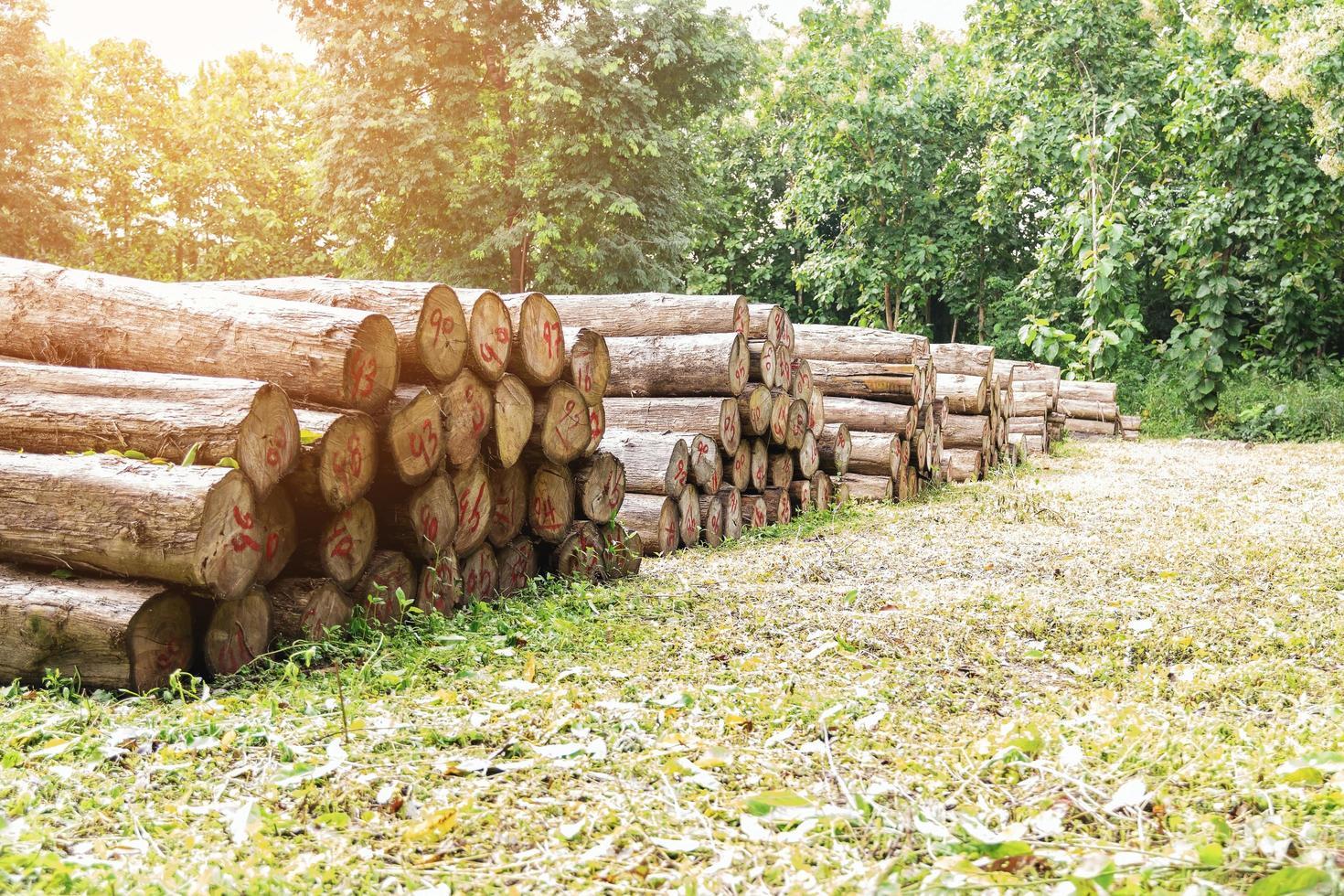troncos de madera de teca dorada foto