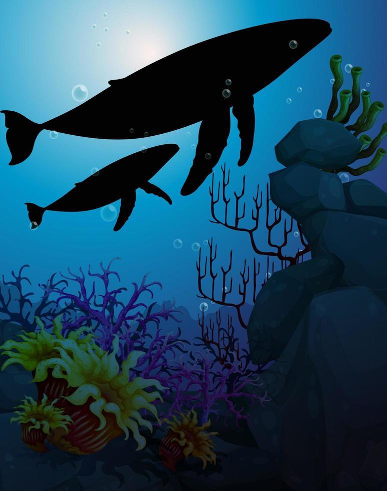 Humpback whales in nature scene silhouette vector