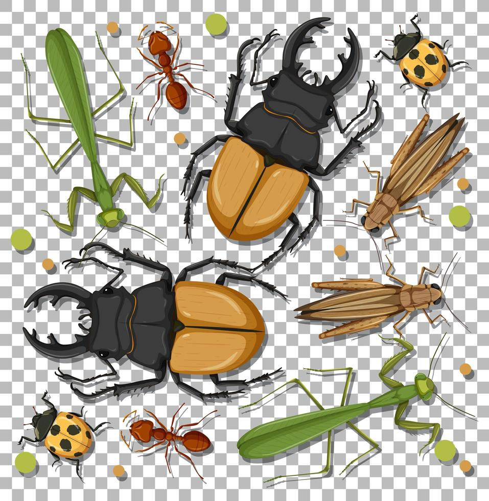conjunto de diferentes insectos. vector