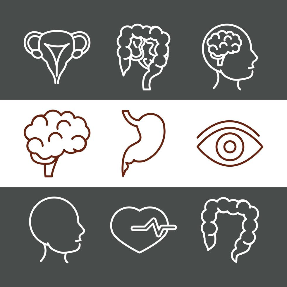 Human body anatomy and health icon set vector