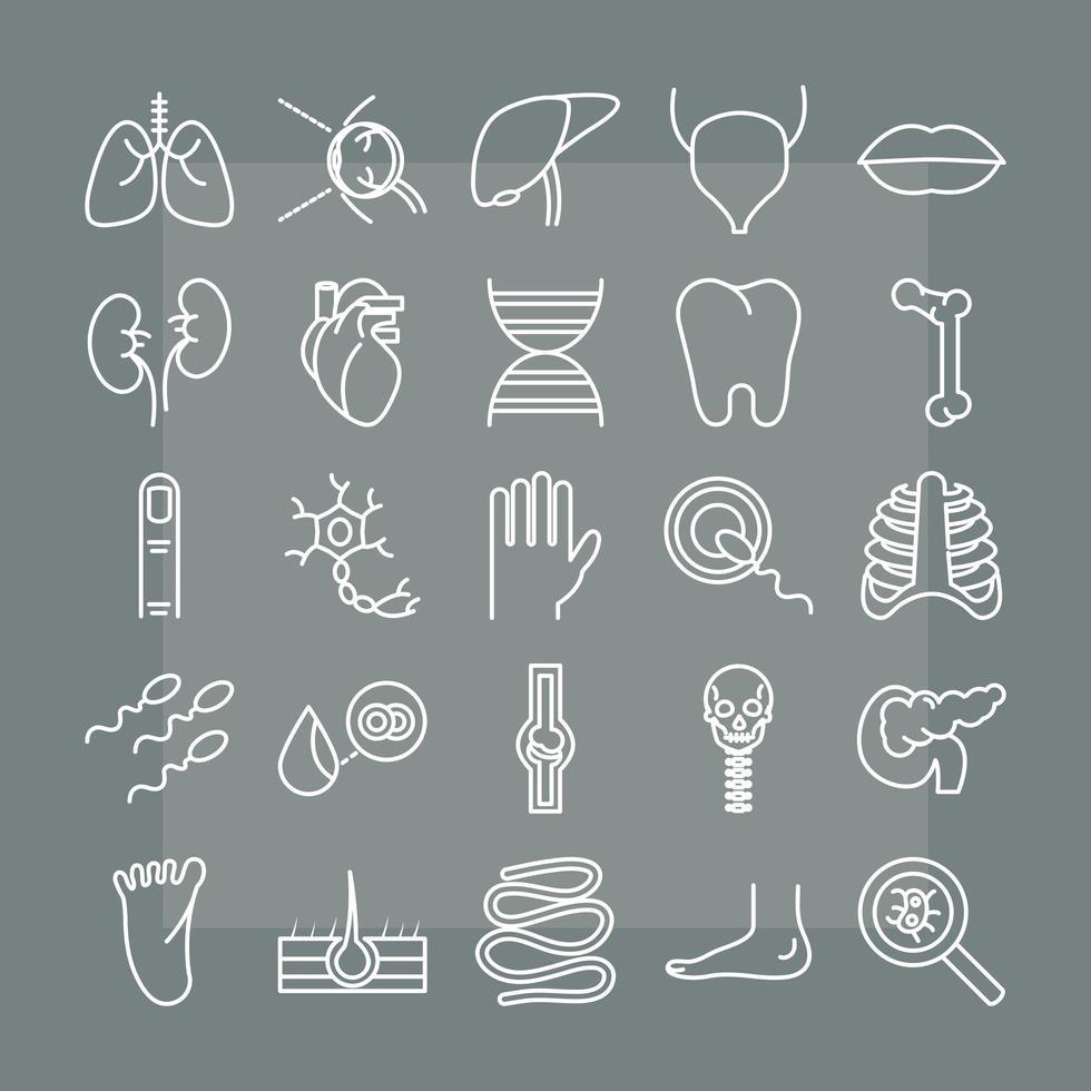conjunto de iconos de anatomía y salud del cuerpo humano vector