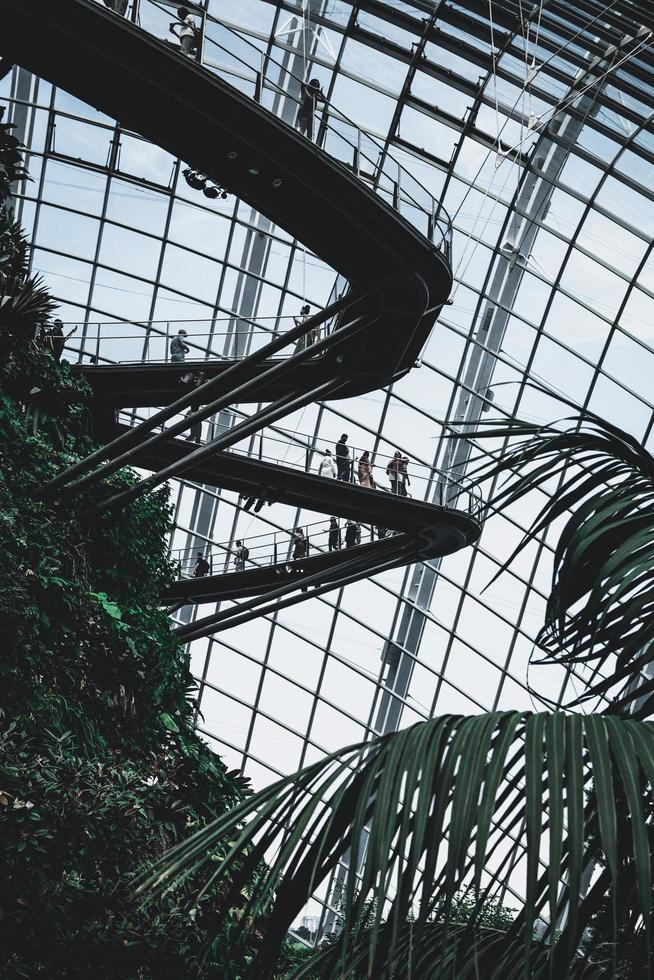 Shanghai, China, 2020 - Looking up in a greenhouse photo