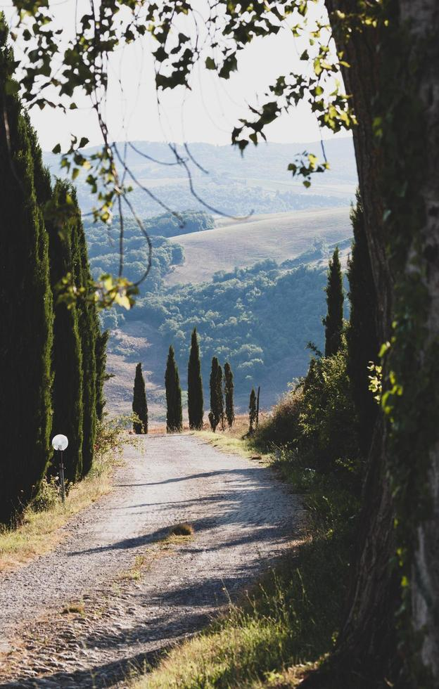 Road through the countryside photo