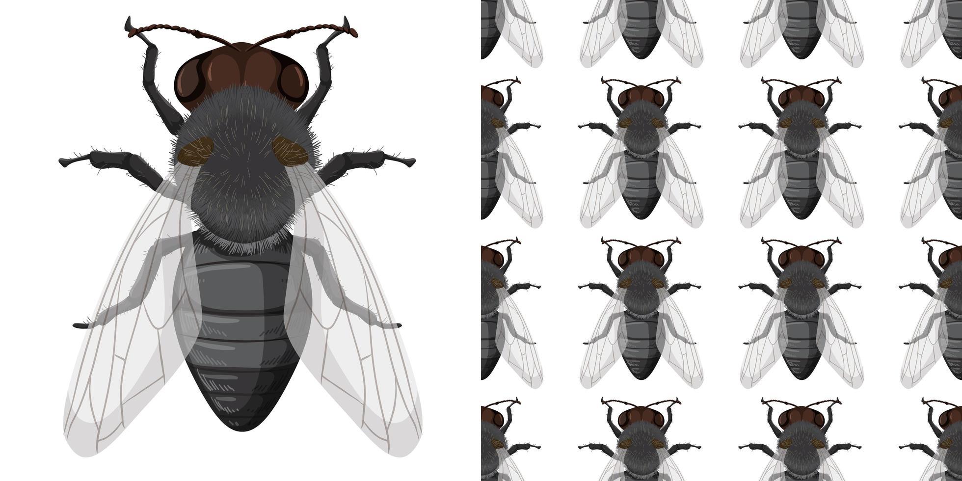 mosca insecto y fondo transparente vector