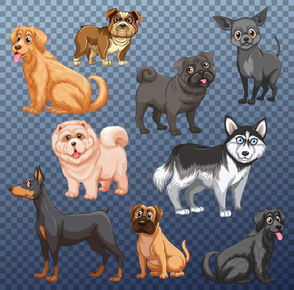 conjunto de diferentes perros. vector