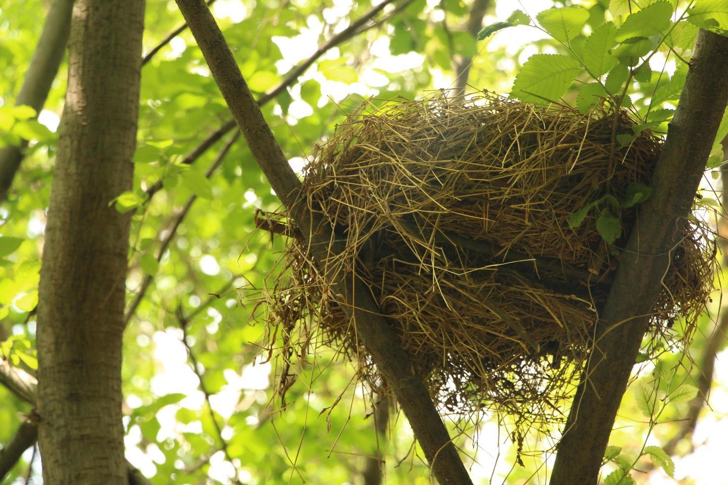Bird's nest in a tree photo
