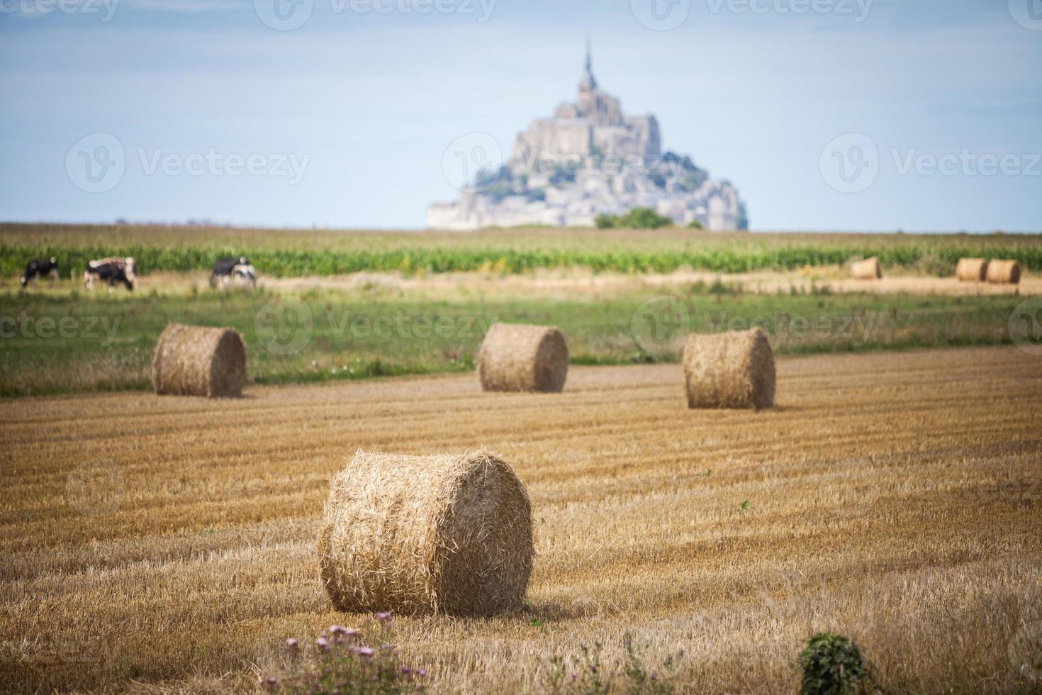 Hay rolls on field photo