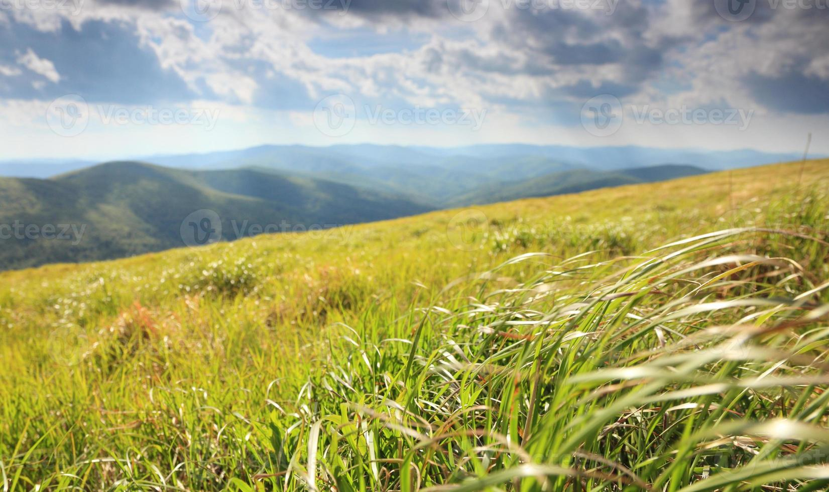 Nature. Field mountain landscape in the summer photo