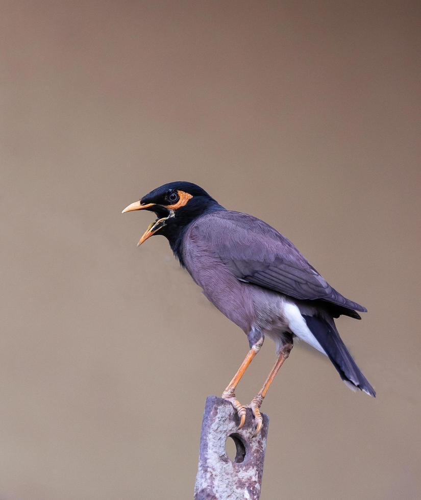 pájaro posado en la rama de un árbol foto