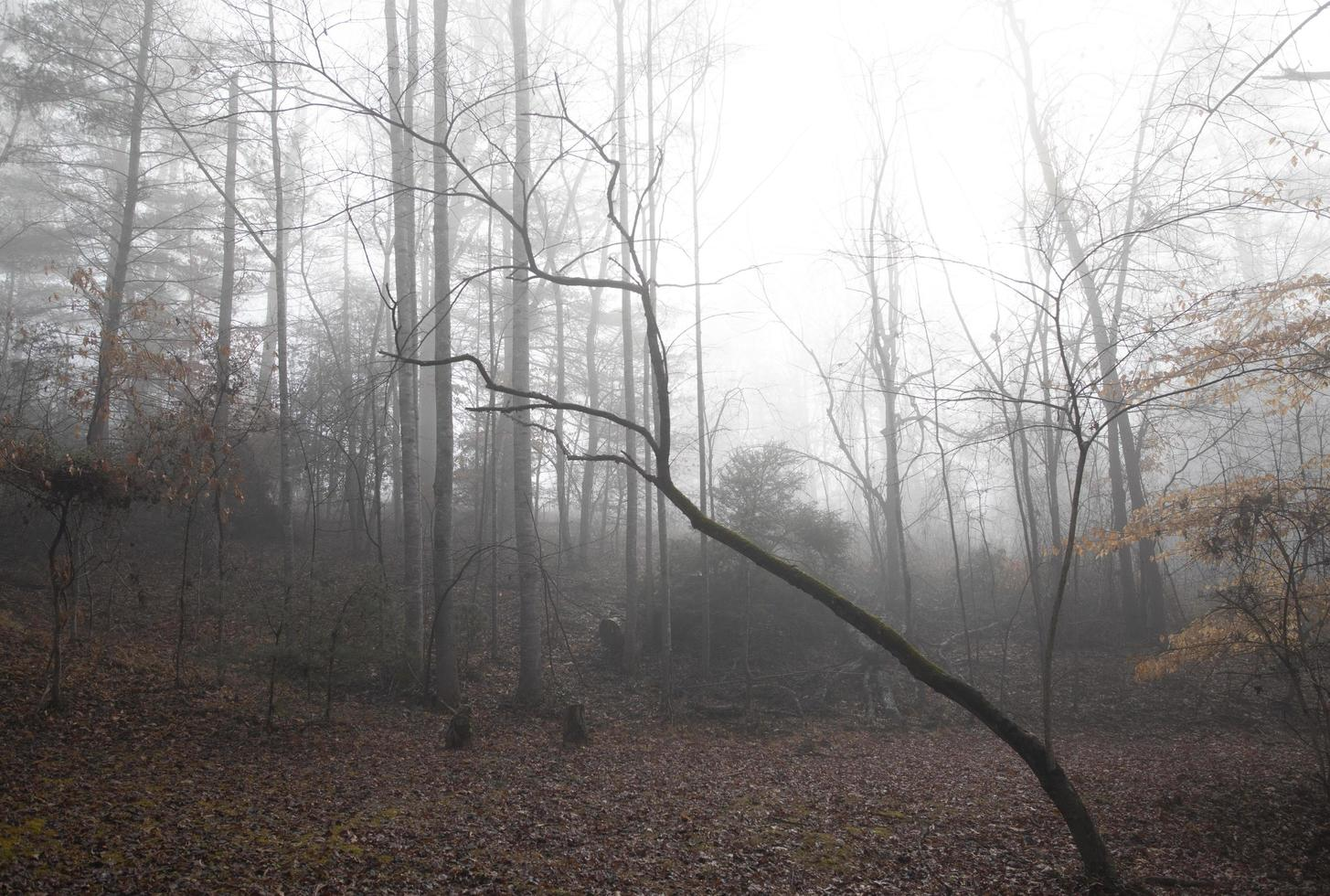 Rural woodland clearing on a foggy winter morning photo