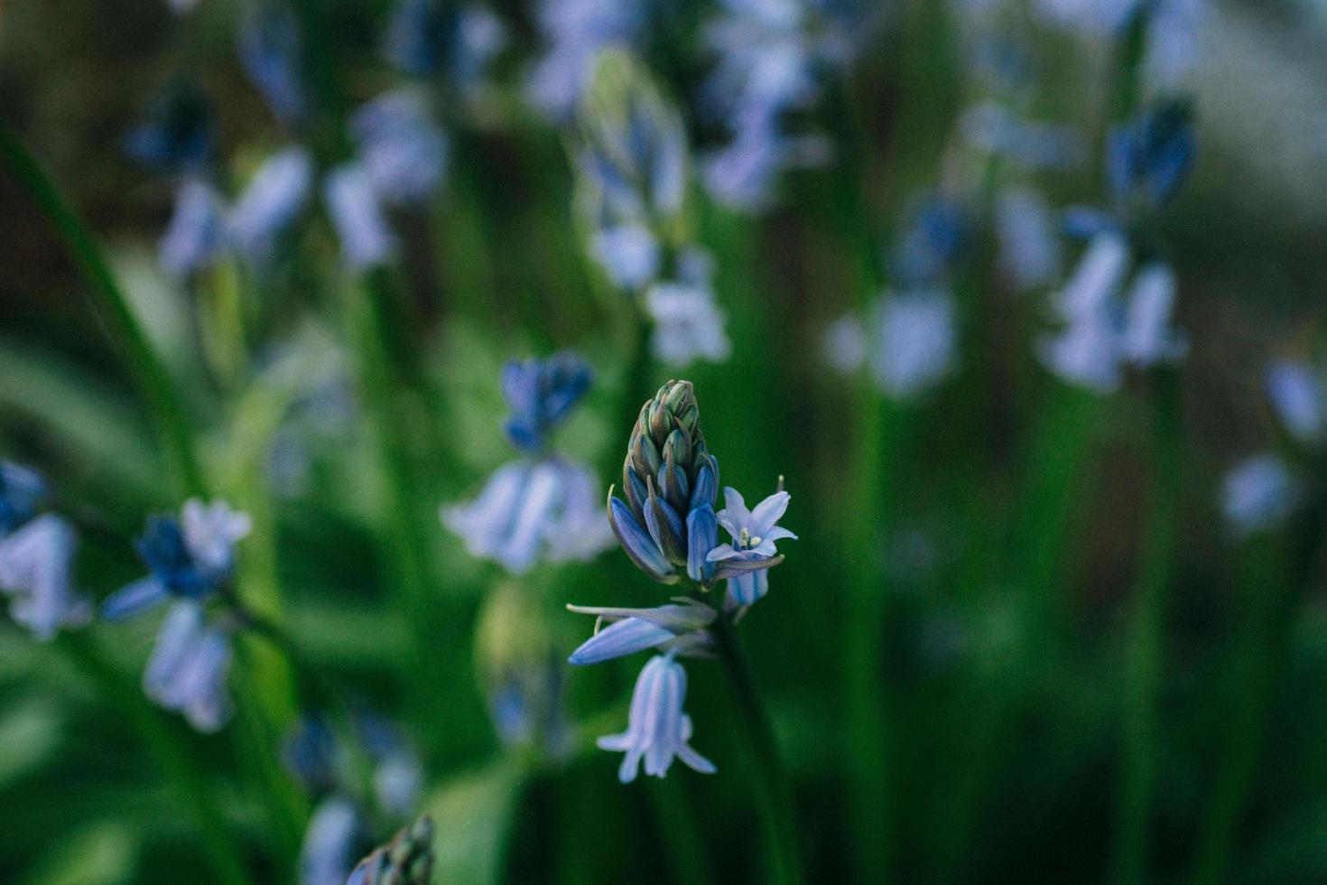 flor azul que florece durante el día foto
