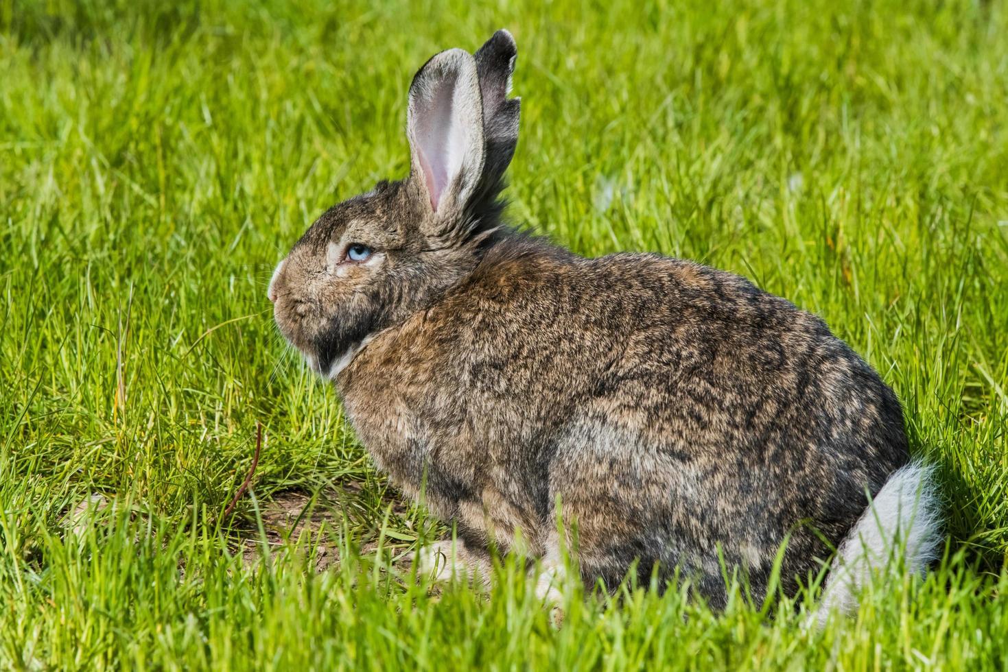 conejo en pasto verde foto