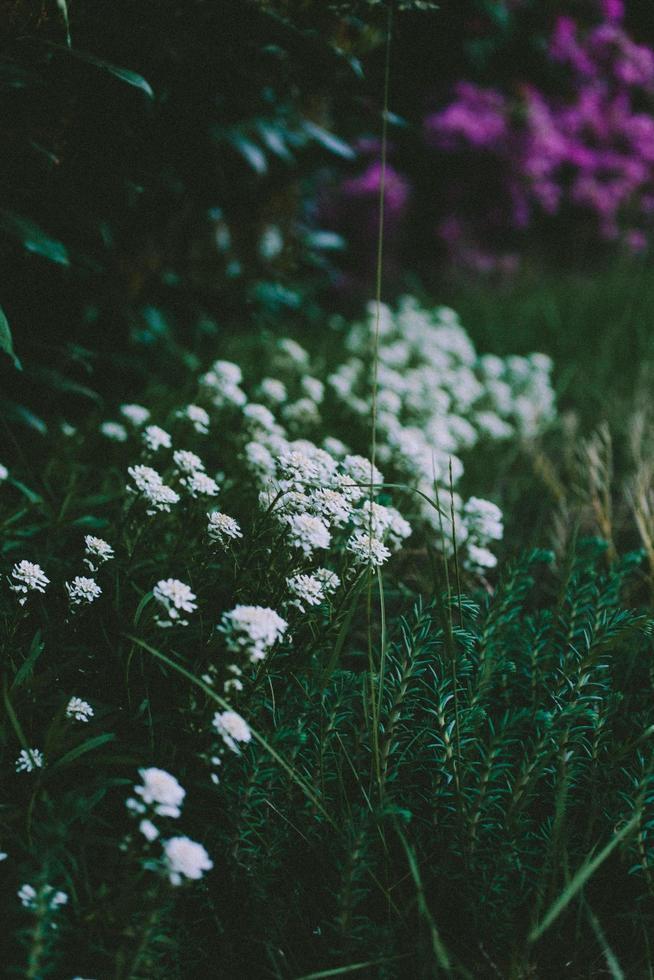 White flowers in tilt shift lens photo