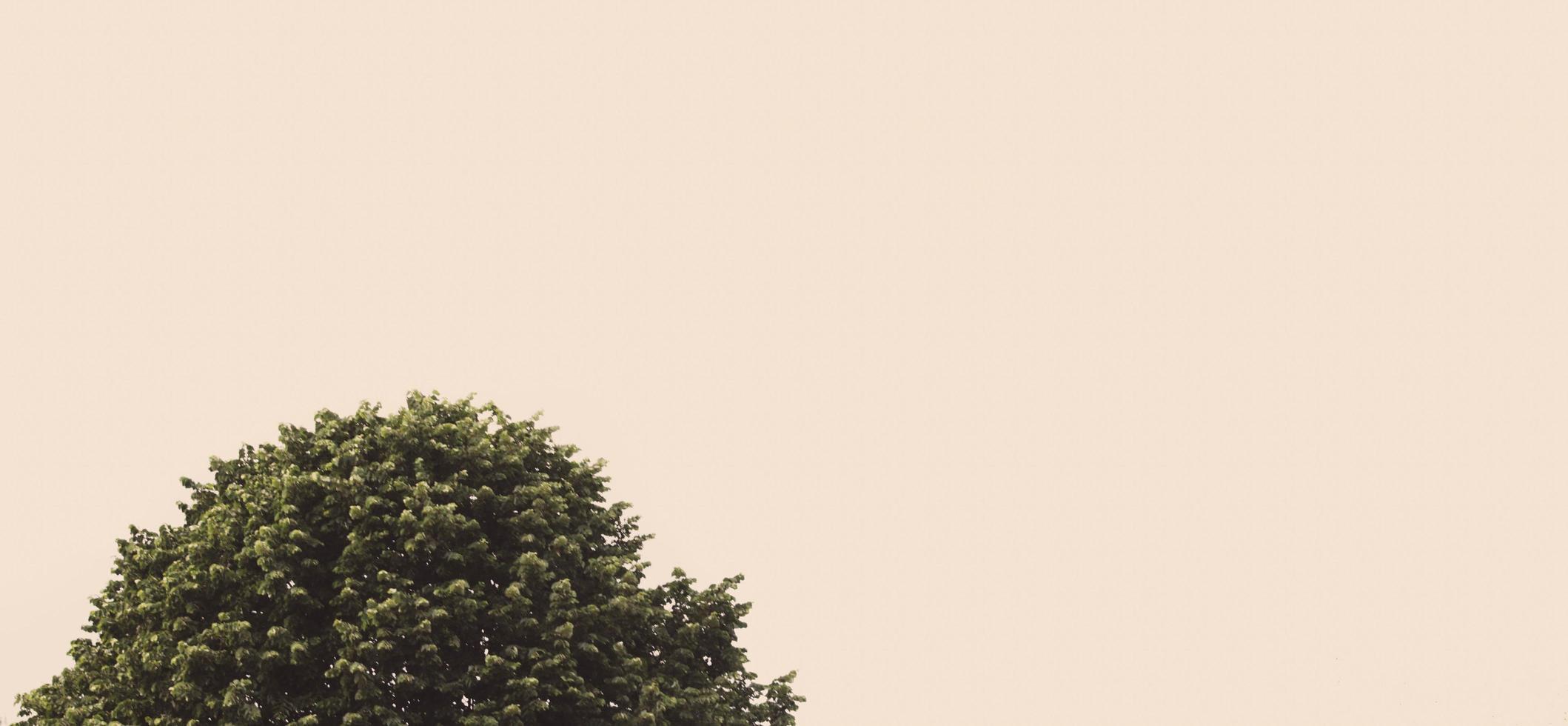 copa de los árboles al atardecer foto