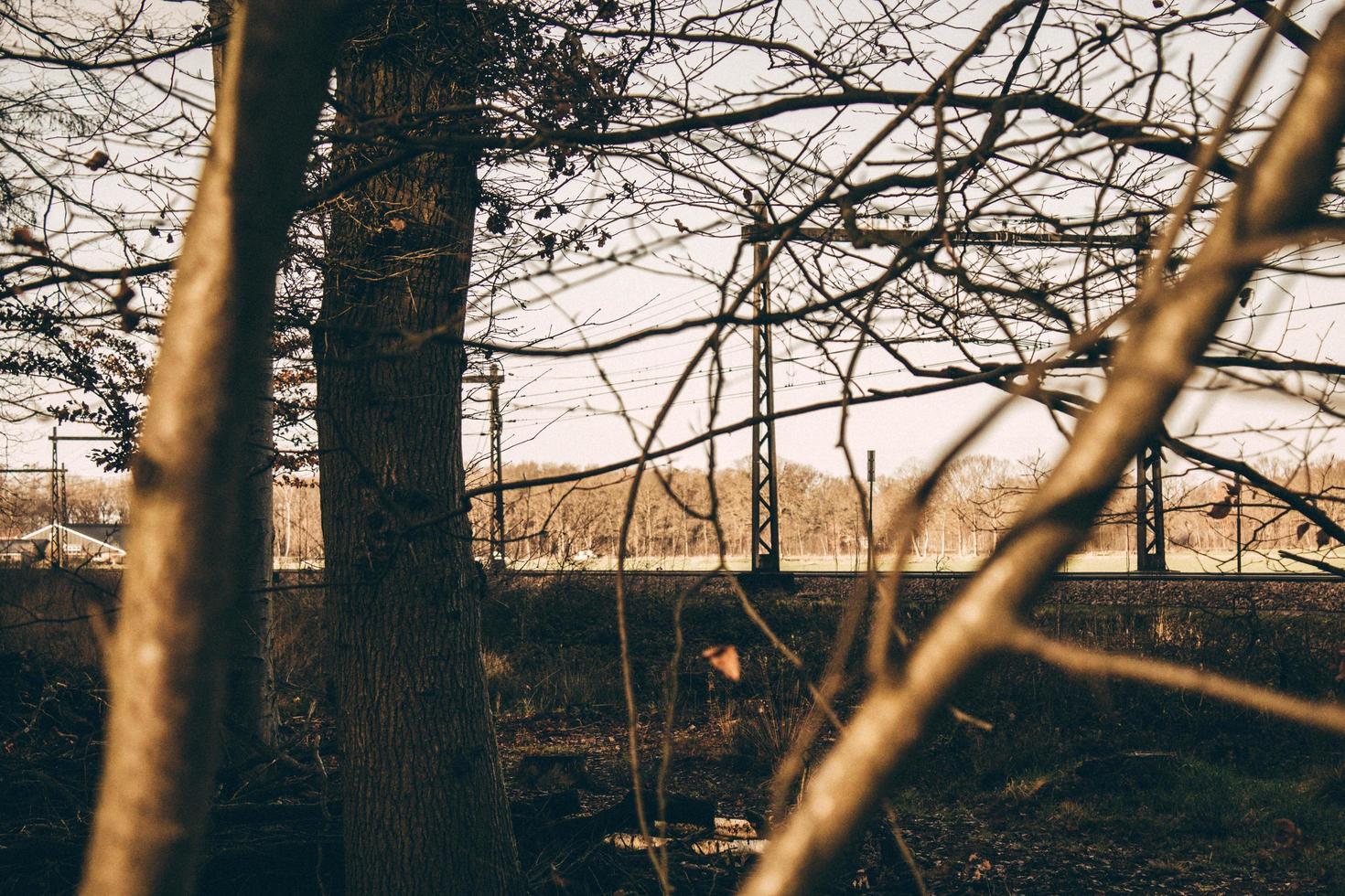 árboles desnudos durante la hora dorada foto