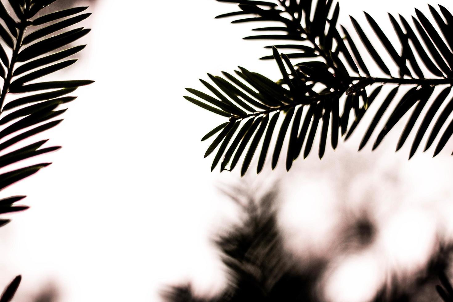 hojas verdes al atardecer foto