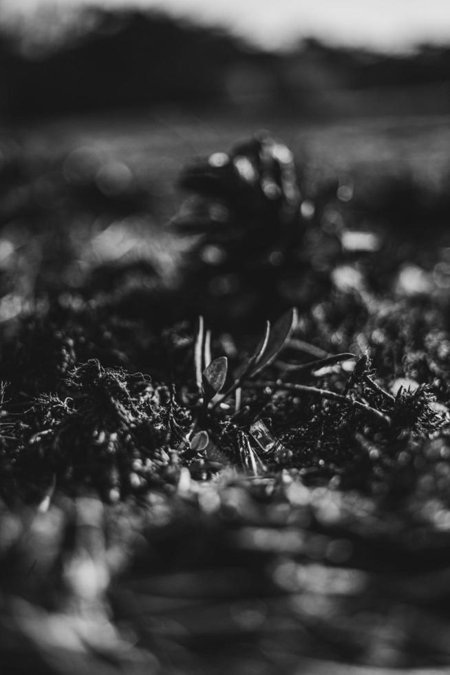 Grayscale of a grass field photo