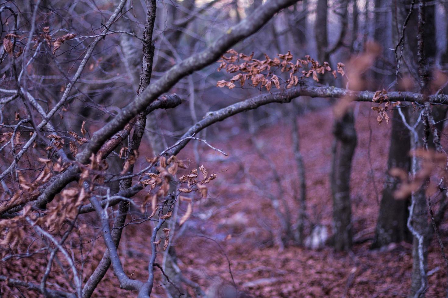 Woods at night photo