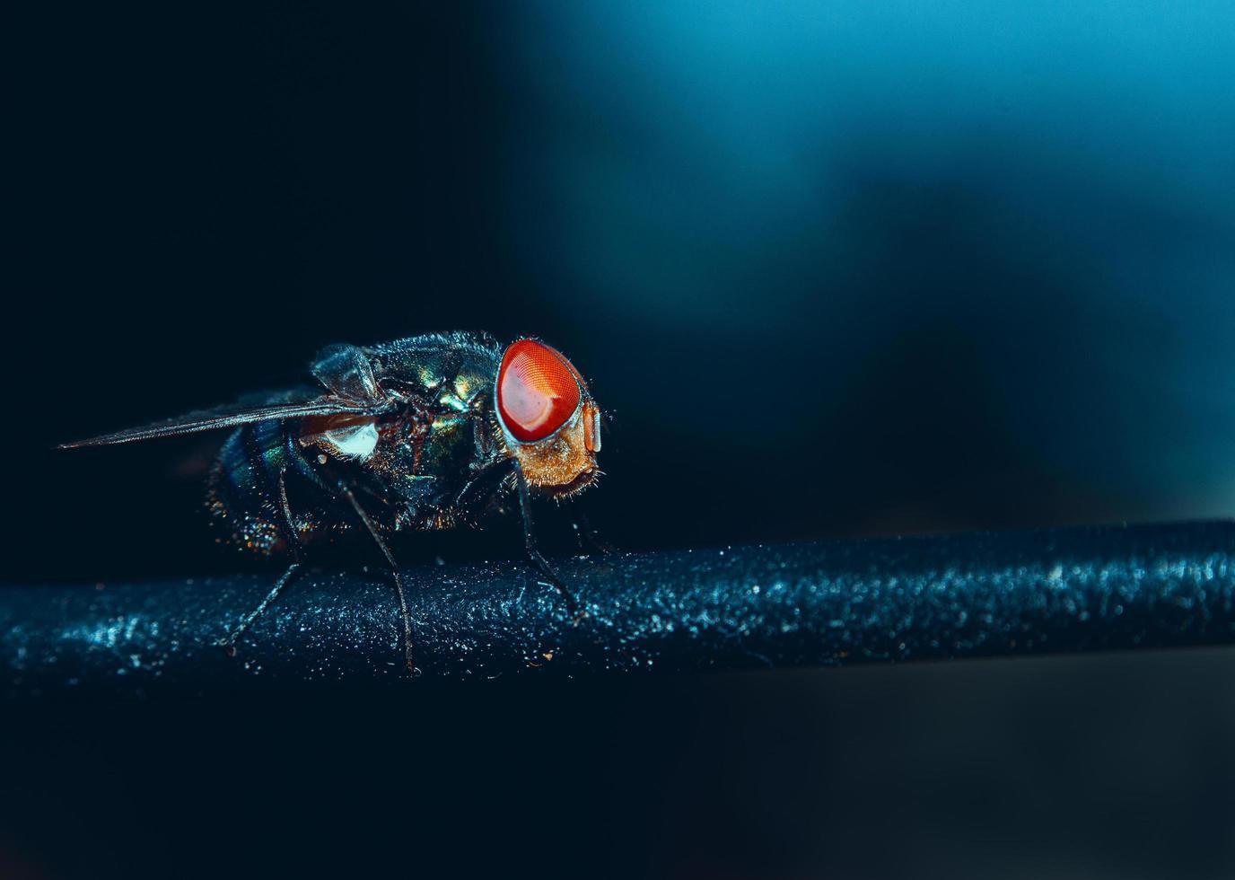 primer plano de una mosca foto