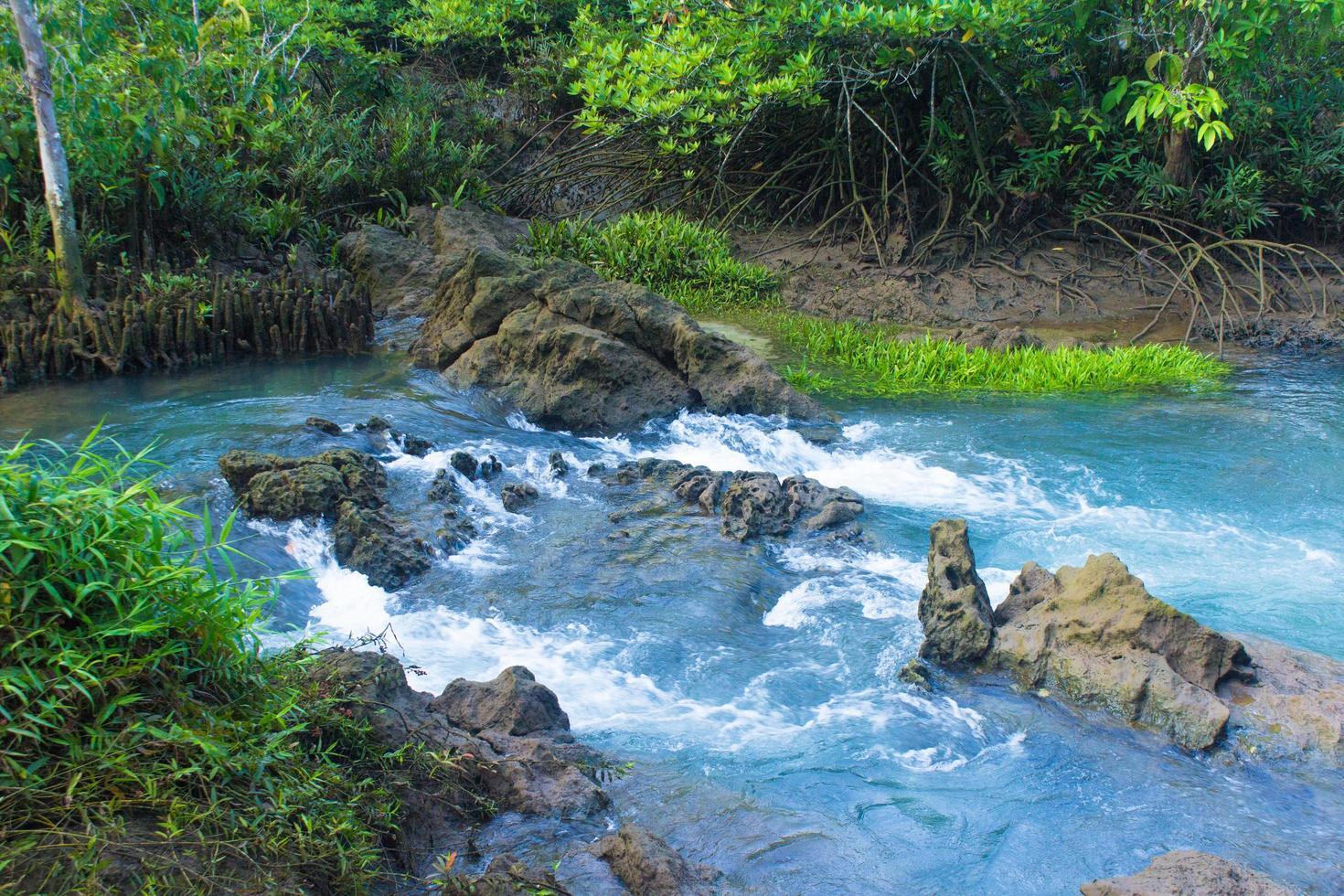 bosque y un rio foto