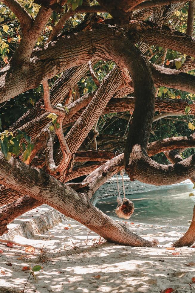 árbol de mangle en la playa foto