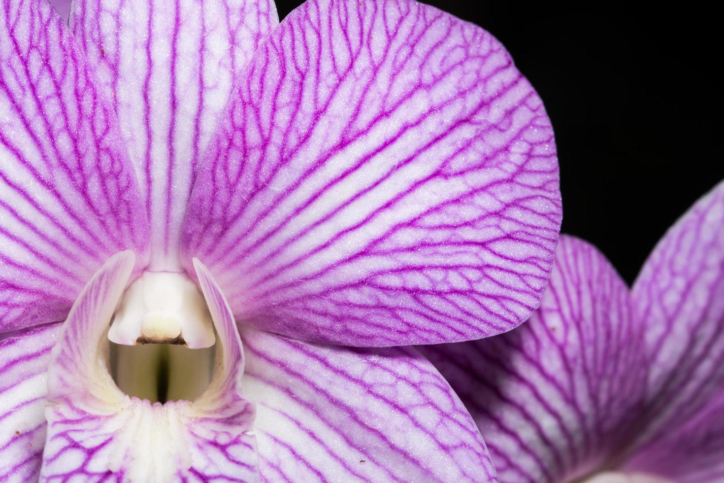 primer plano de la flor de la orquídea foto