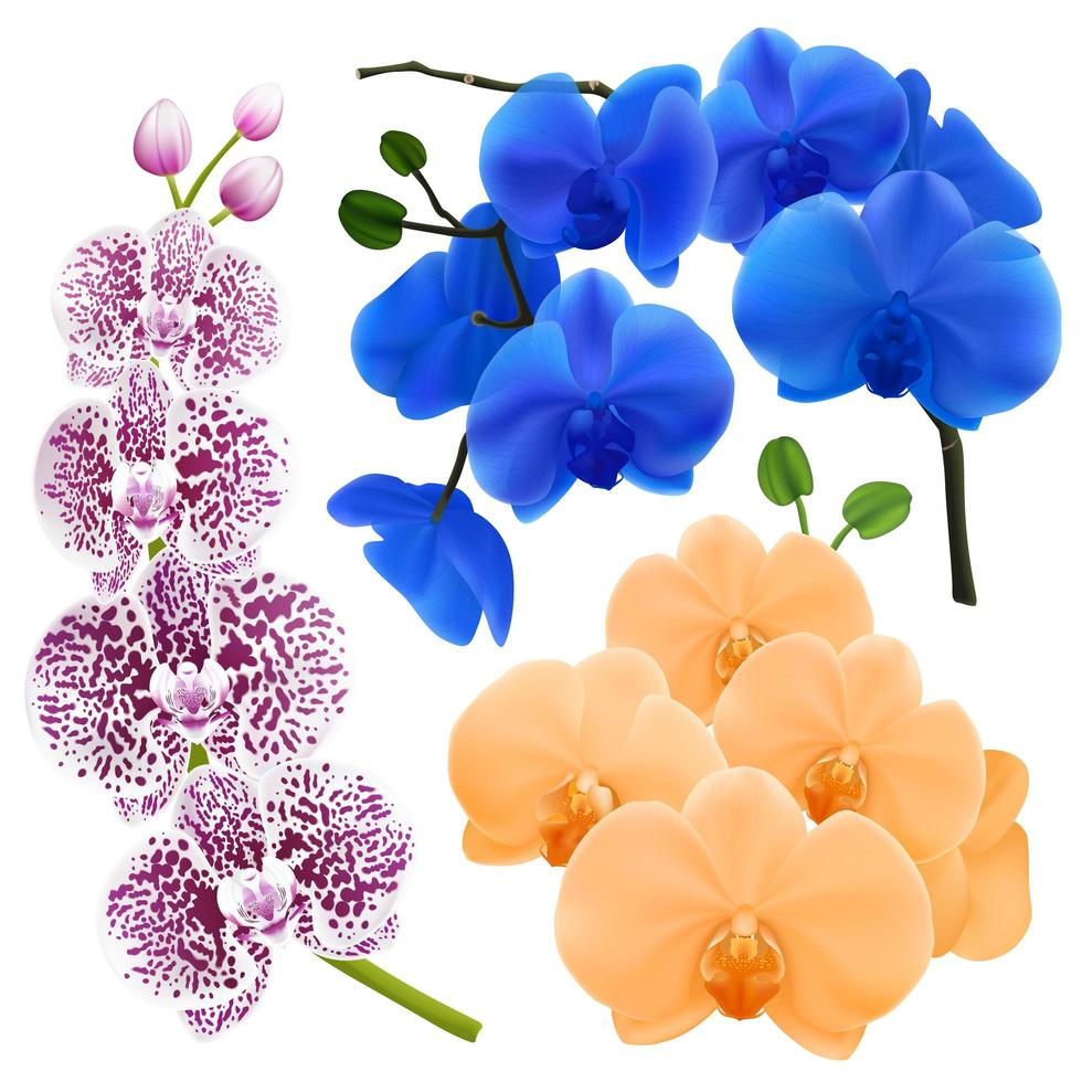 Realistic Orchid Flowers Colorful Collection vector