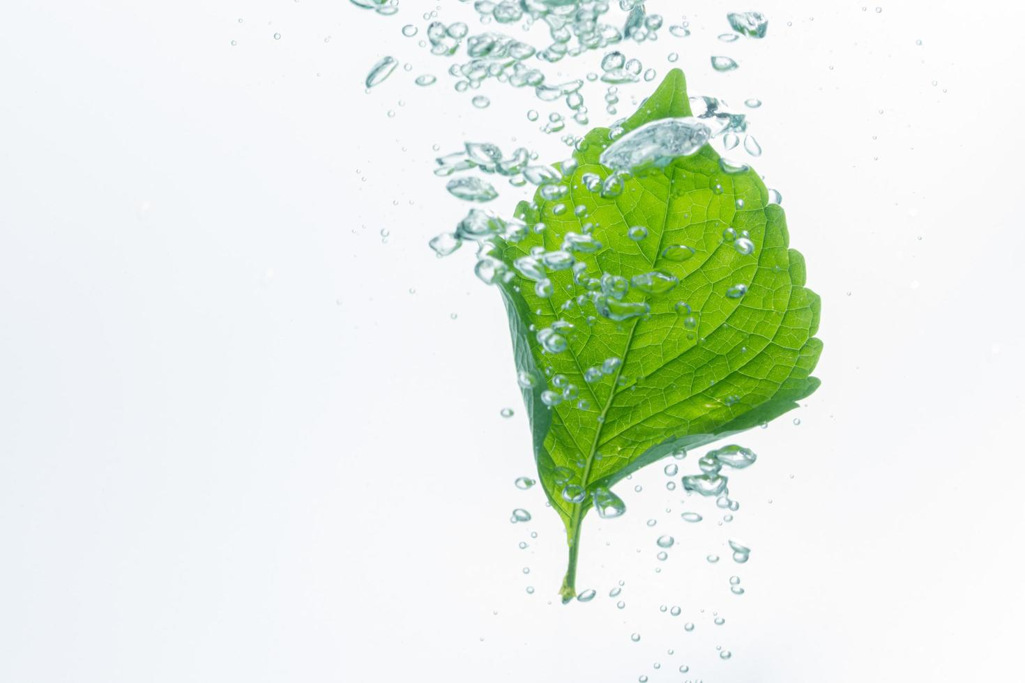 Green leaf and bubbles in the water photo