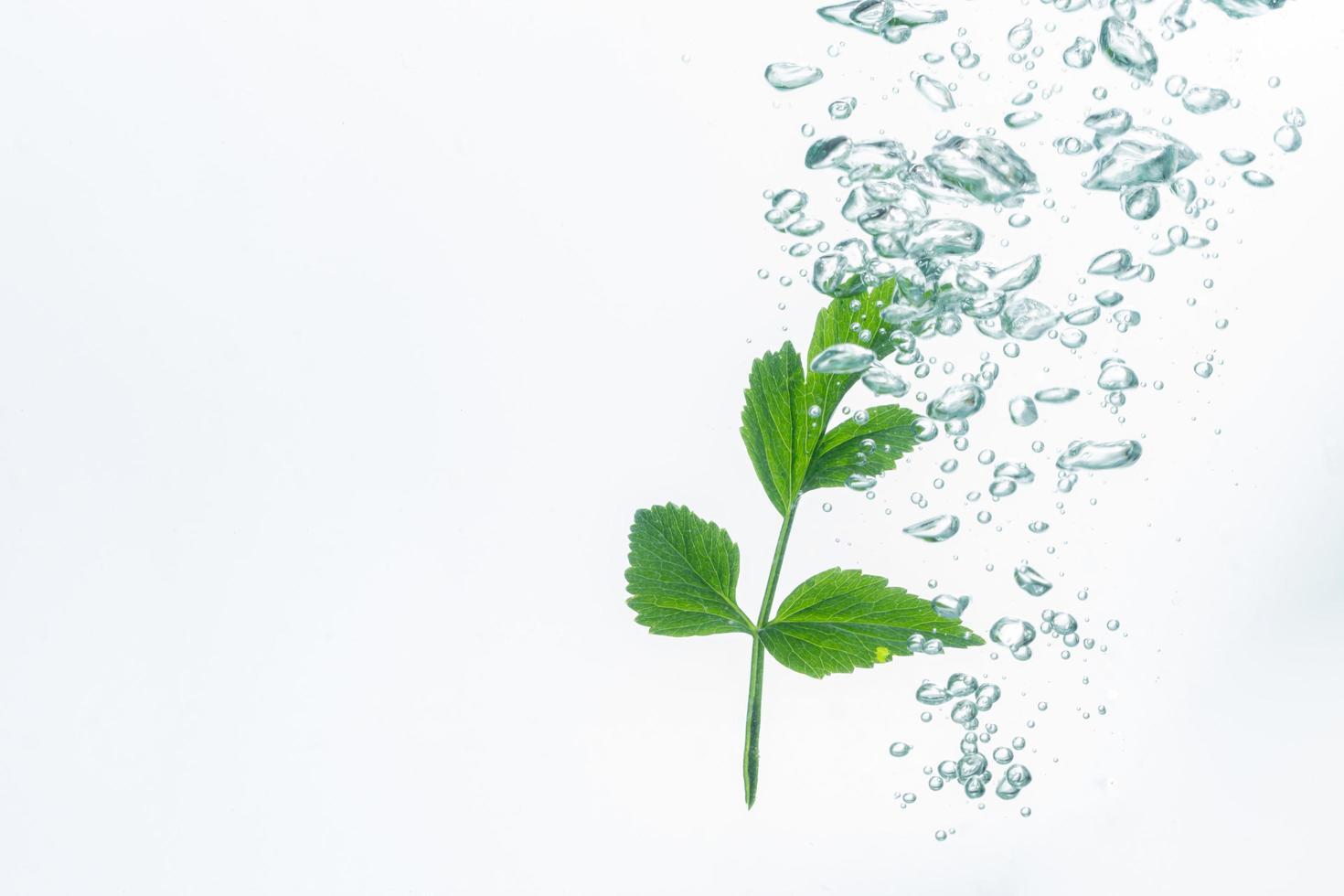 planta verde y burbujas en el agua. foto