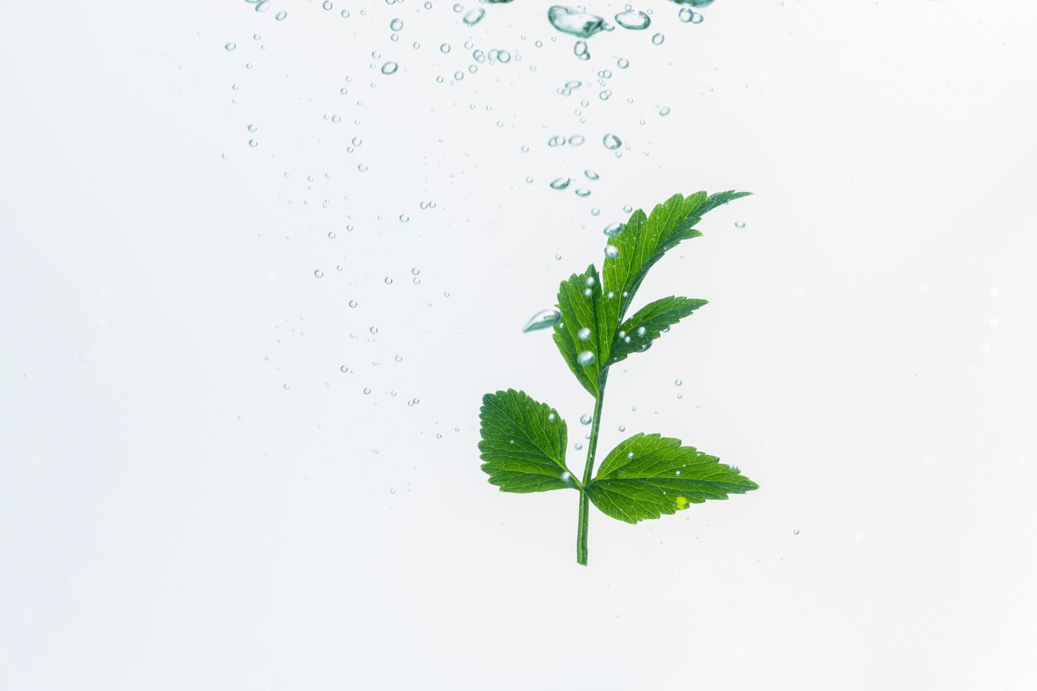 Green plant and bubbles in the water photo