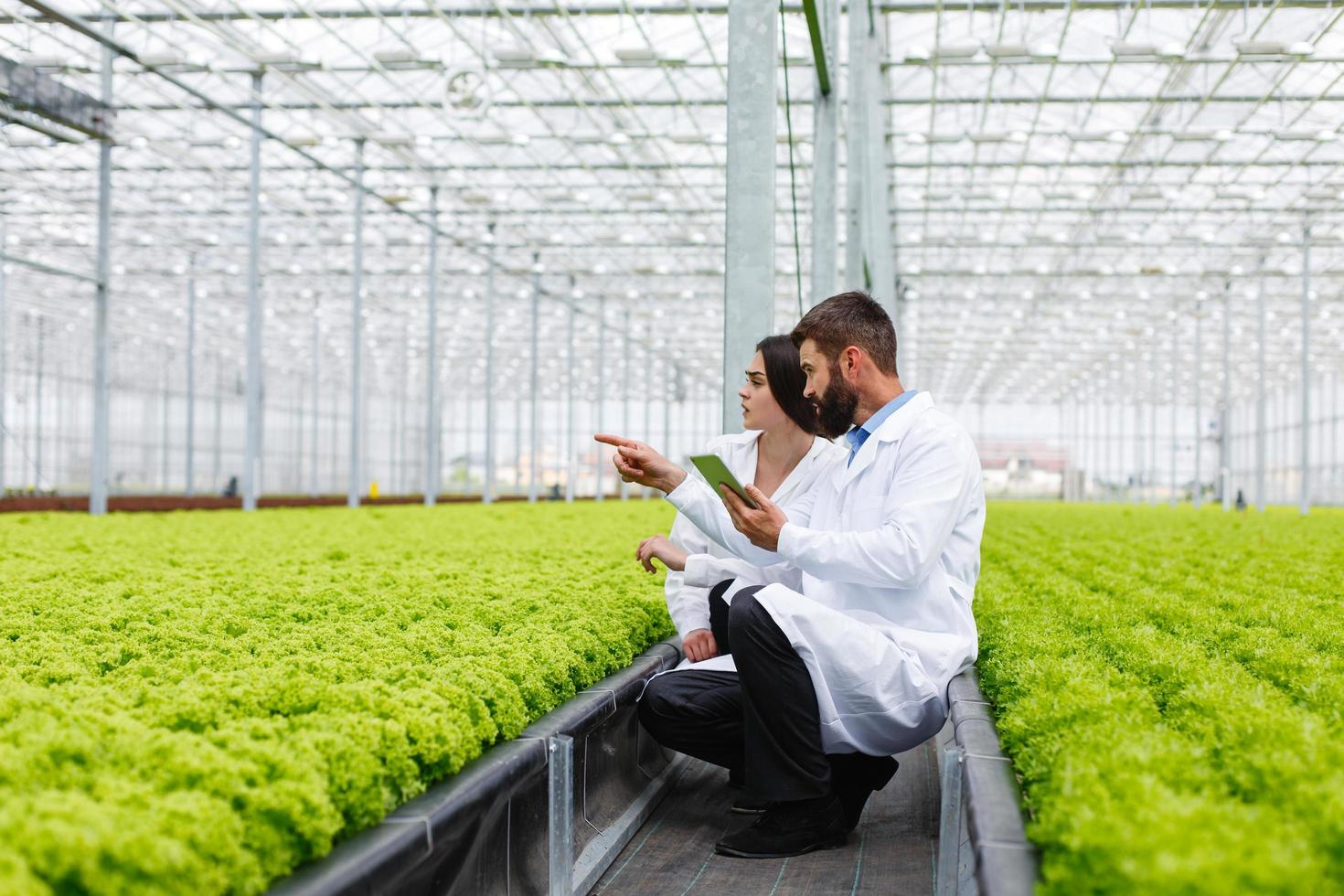 Two researchers in a green house photo