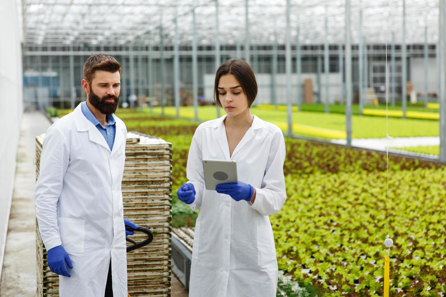Two researchers in laboratory robes walk around the greenhouse with a tablet photo