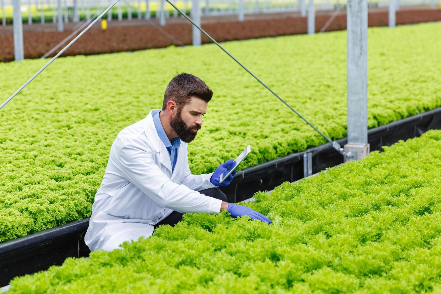 Investigador masculino barbudo estudia plantas con una tableta de pie en el invernadero foto