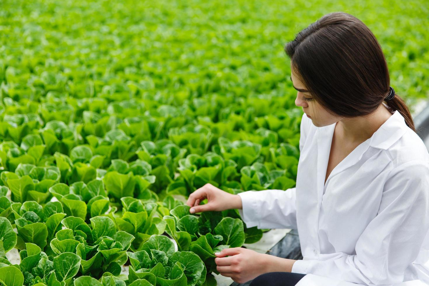 Woman in white laboratory robe examines salad and cabbage photo