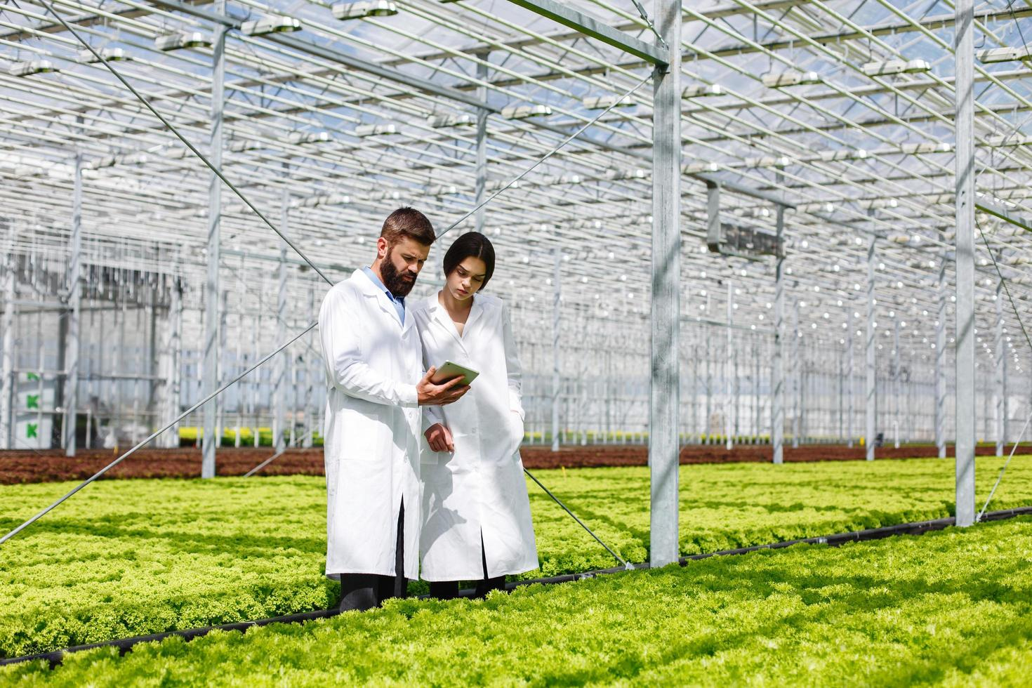 Man and woman standing in the greenhouse photo