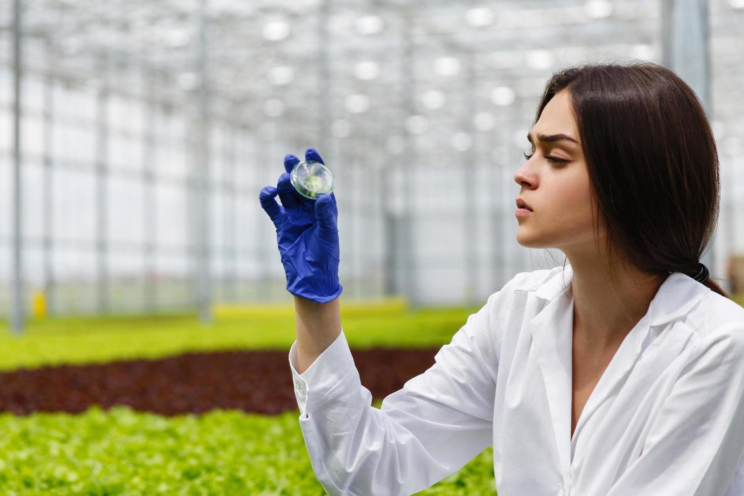 Female researcher looks at a greenery in Petri dish photo