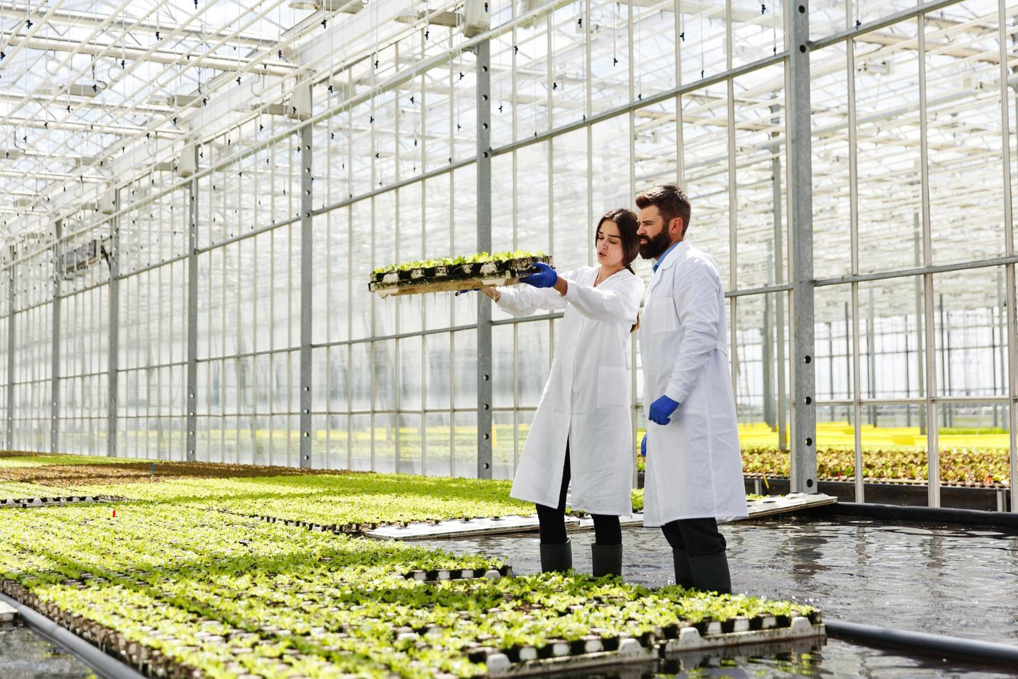 Man and woman in laboratory robes work with plants in a greenhouse photo
