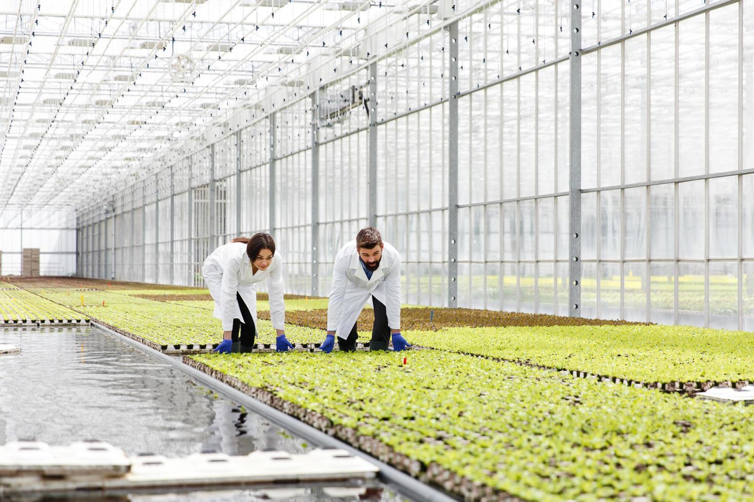 hombre y mujer en batas de laboratorio trabajan con plantas foto