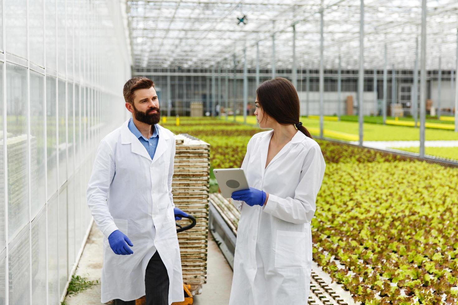 Dos investigadores con batas de laboratorio caminan alrededor del invernadero con una tableta. foto