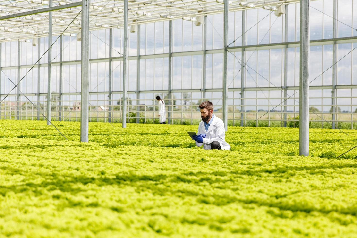 Man researching a greenhouse photo