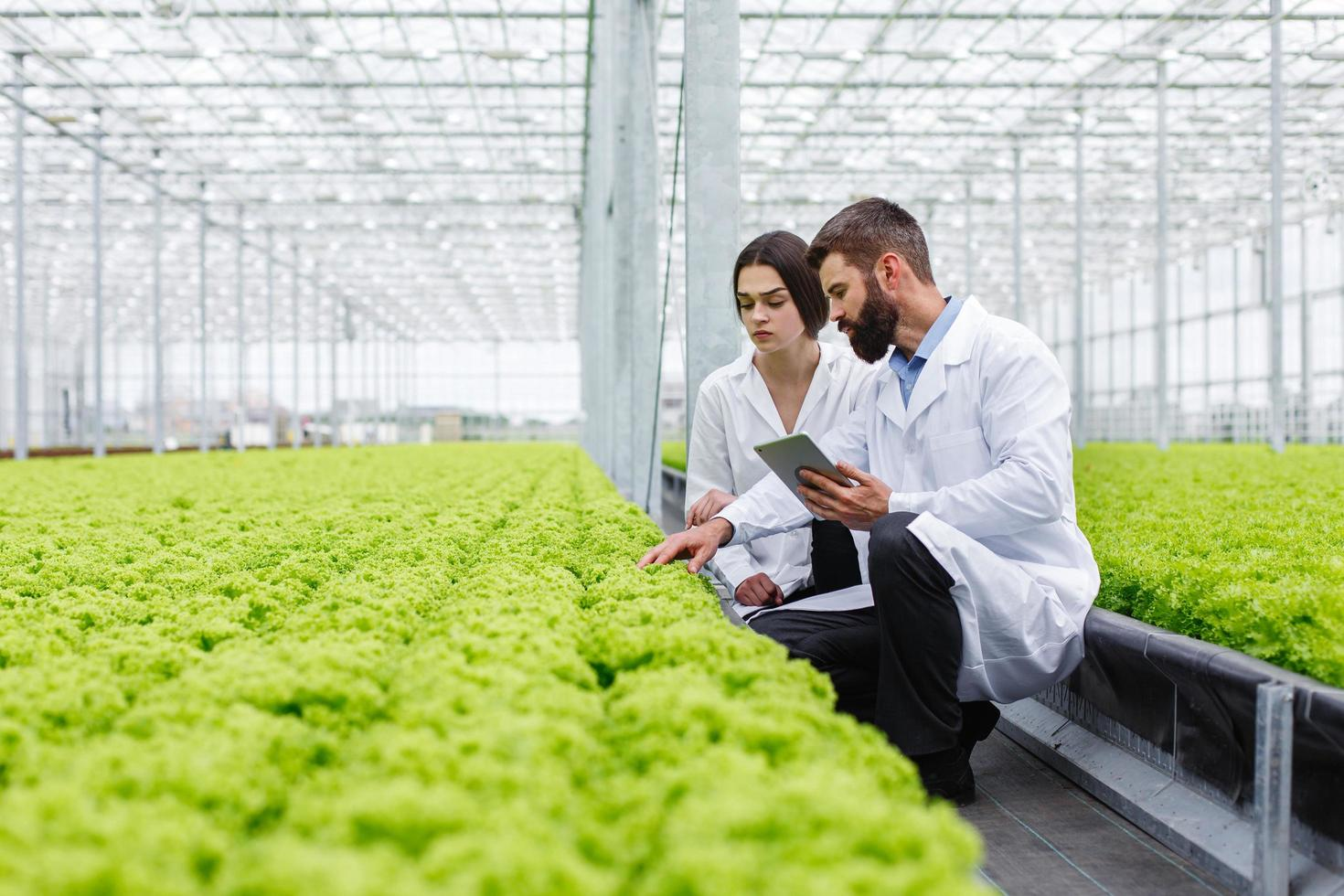 Two scientists monitoring green house photo