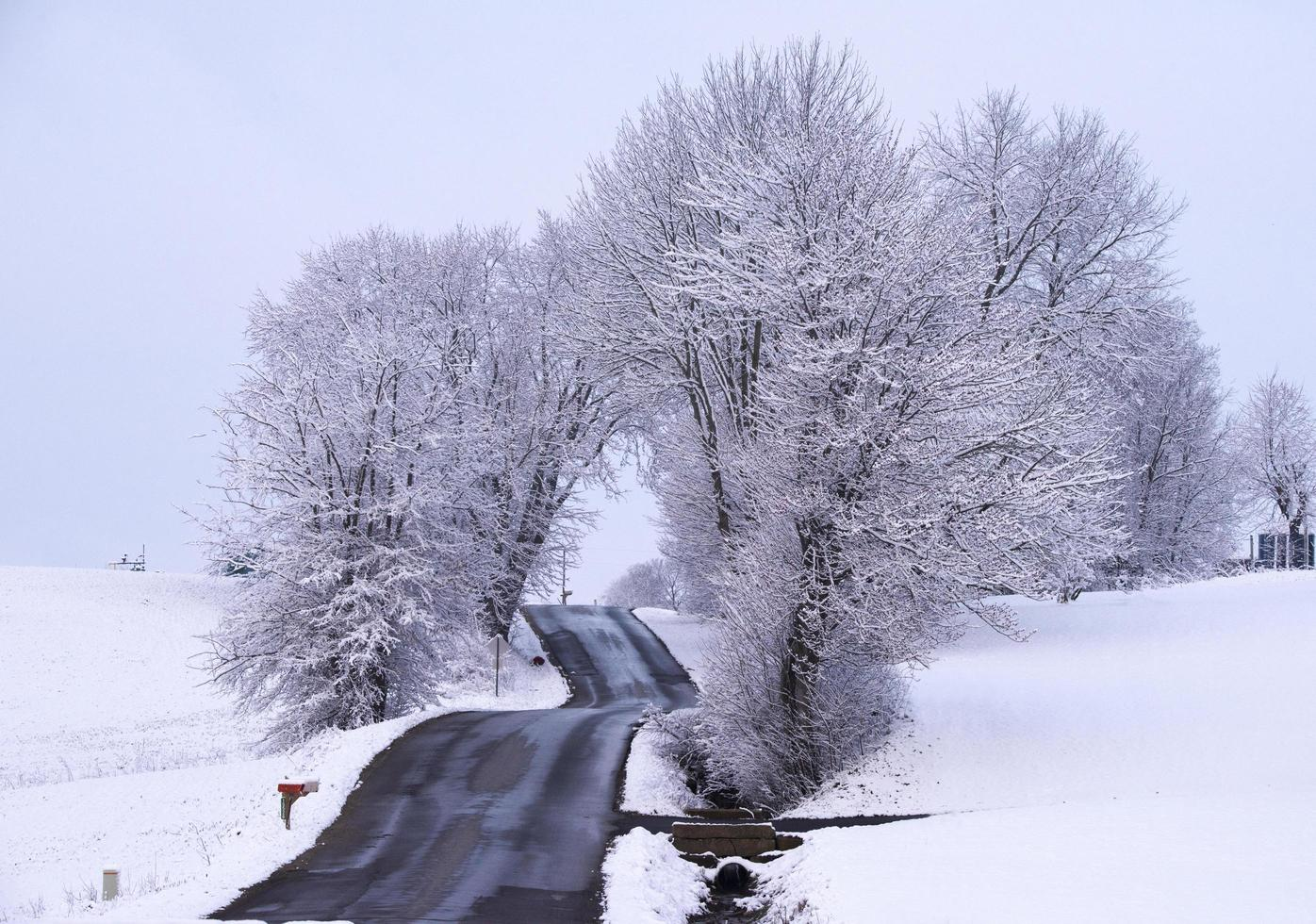 Snow covered bare trees near road photo