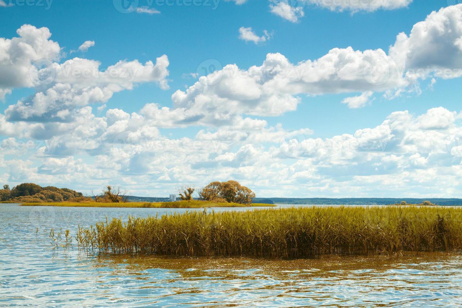 lago de los bosques foto