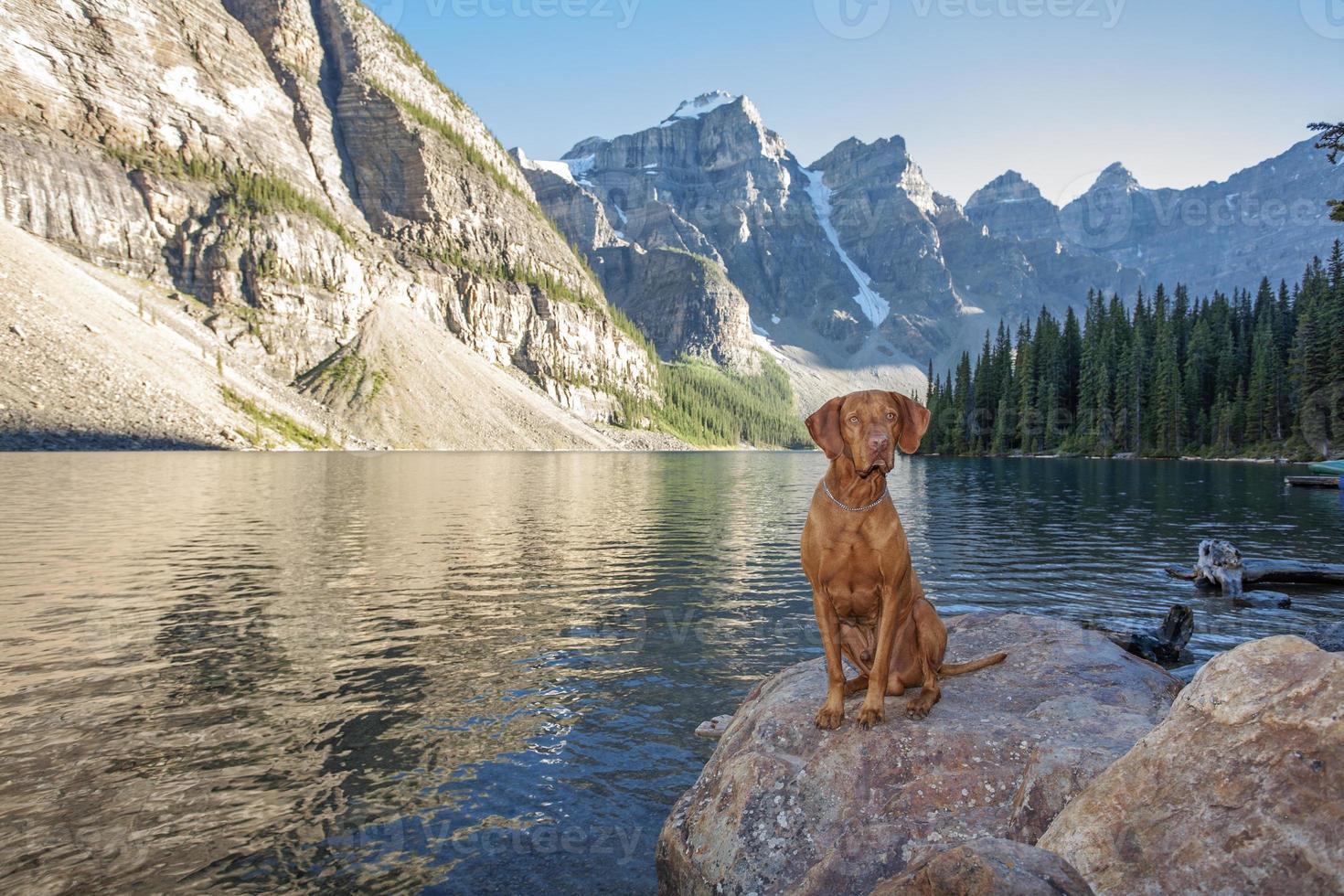 dog sitting on rock by glacier lake photo