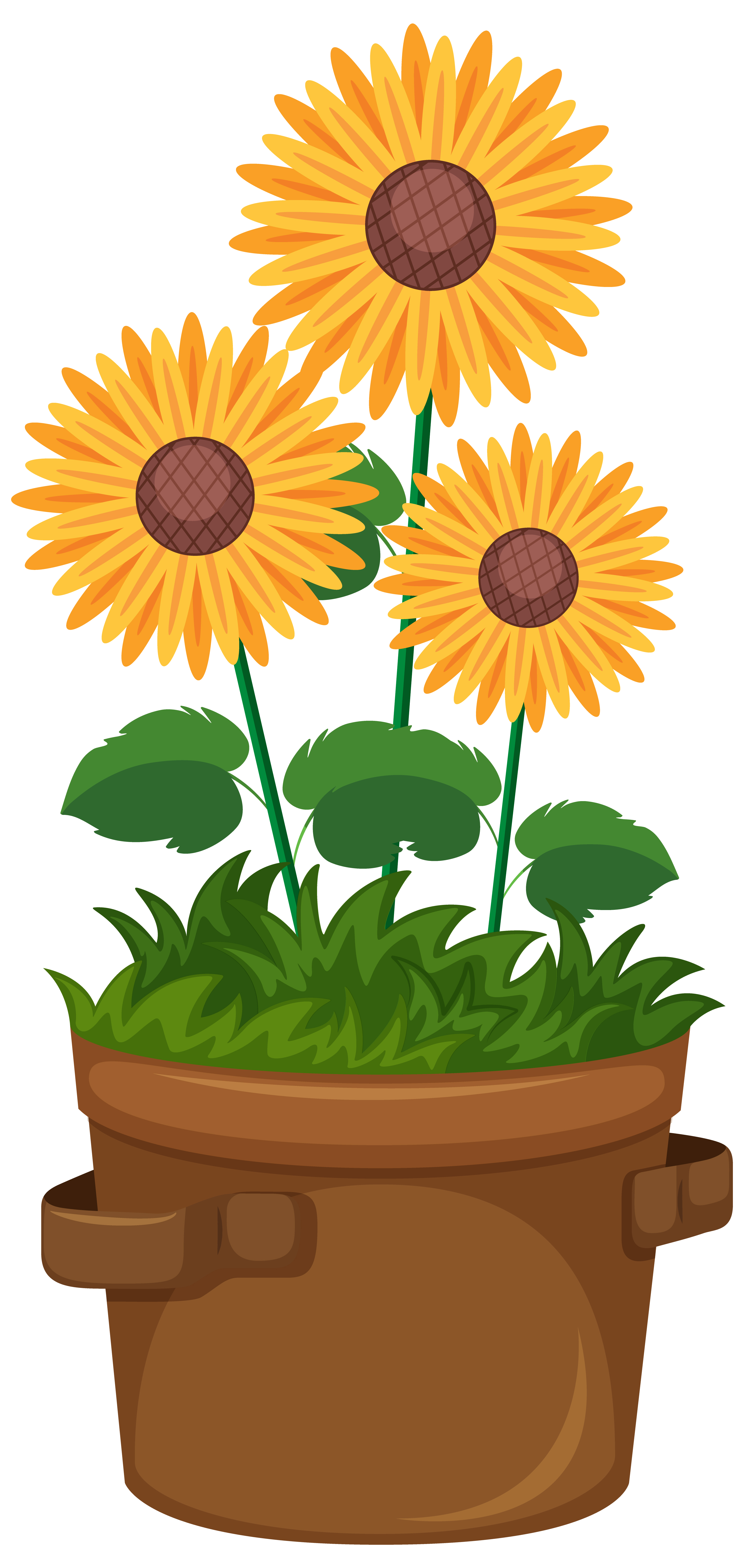 Beautiful Sunflowers In Pot On White Background Download Free Vectors Clipart Graphics Vector Art
