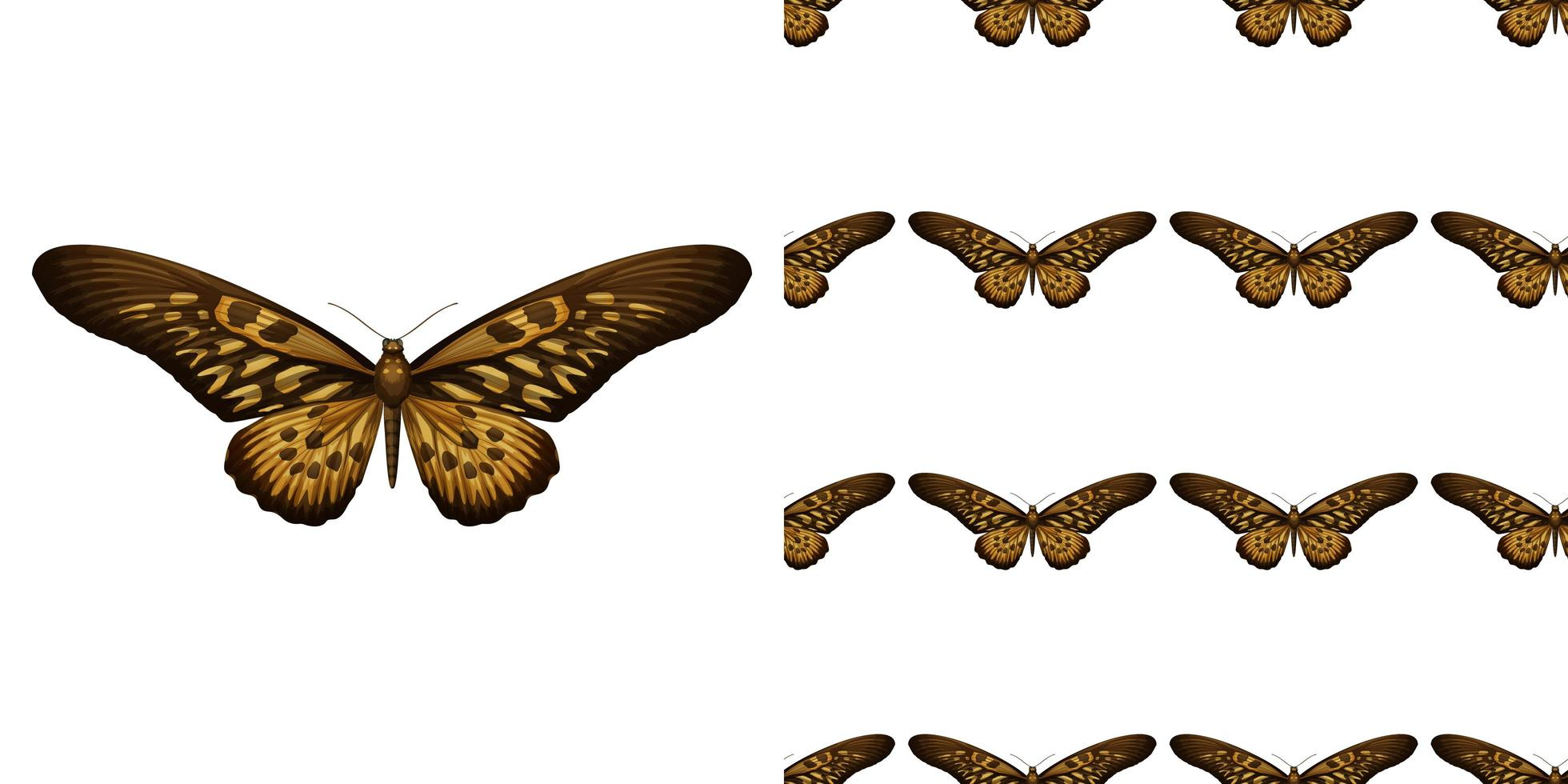 A butterfly isolated on white background and butterfly seamless vector