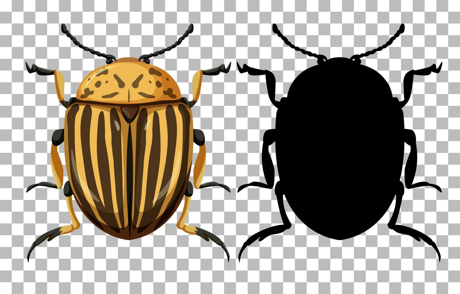 Colorado beetle on transparent background vector