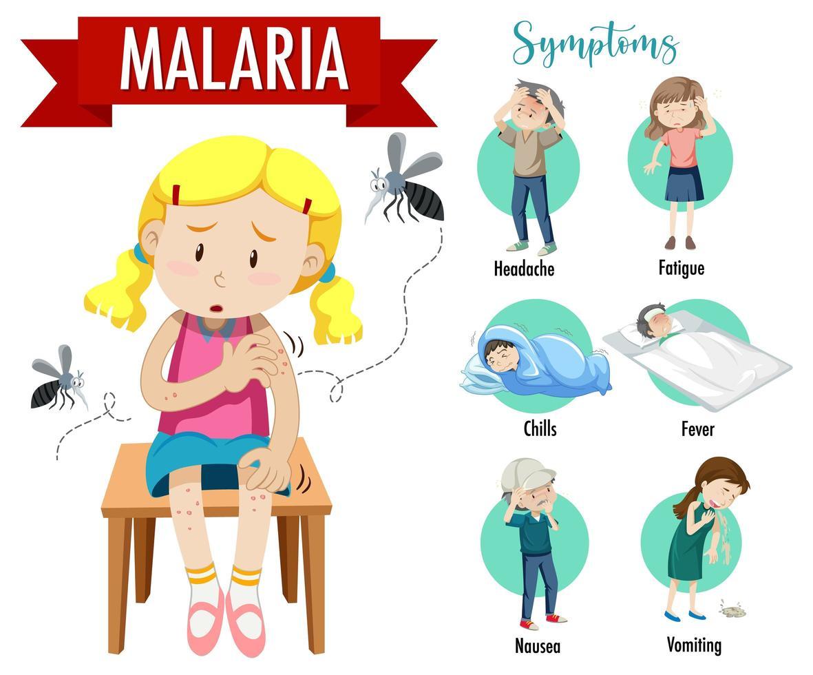 infografía de información de síntomas de malaria vector