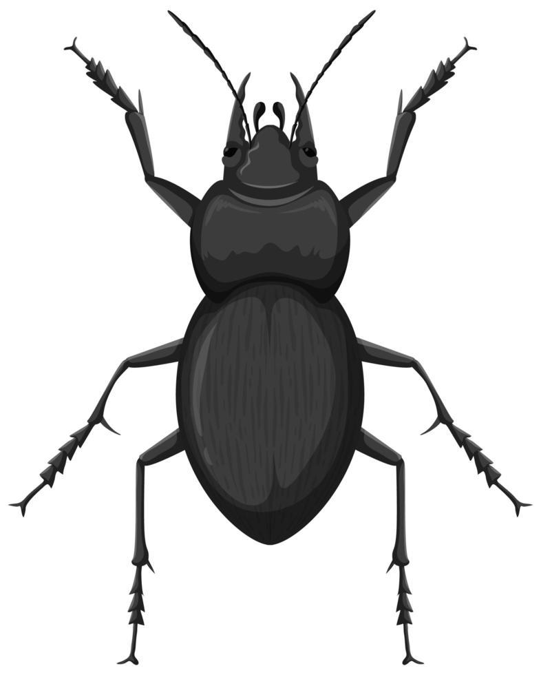 Carabidae aislado sobre fondo blanco. vector